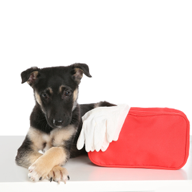 Bigstock cute puppy with first aid kit  295504120 20 1