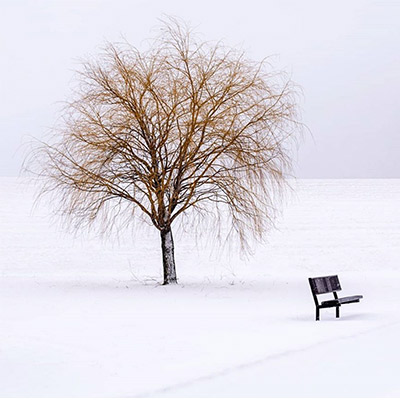 bare tree in snow with bench