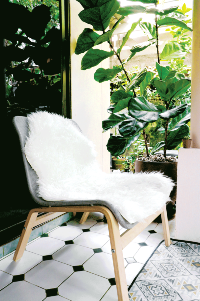white chair on patio, fiddle fig