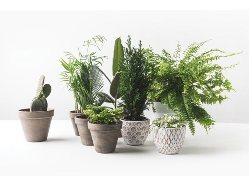 guide to indoor plants