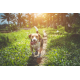 Raw Foods Make Great Pet Treats