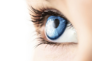 Medium istock 000018380453large blue eye macro