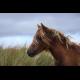 Local Non-Profit Equine Therapy Resources
