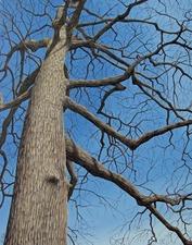 Medium trees