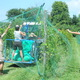 """The """"Netting Ballet"""", our staff applying the netting to the ripening grapes that assures that we and not the birds are the ones who do the final harvest!"""